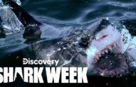 """Great White Comeback"" Shark Week 2021 Discovery"